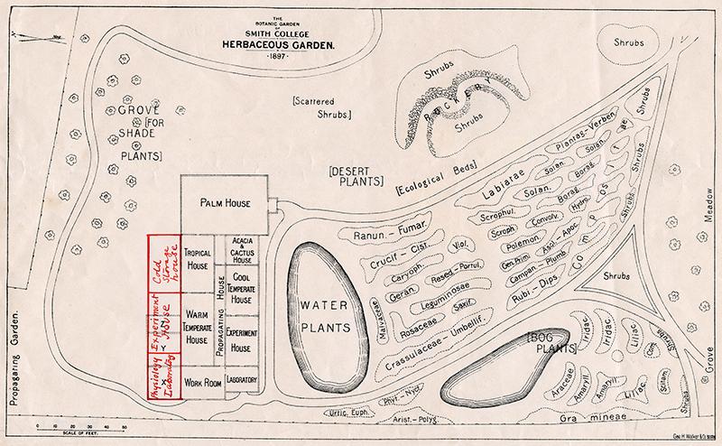 Herbaceous garden Plan 1897