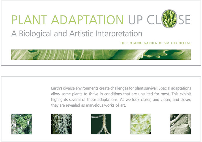 Plant Adaptations title and intro panels