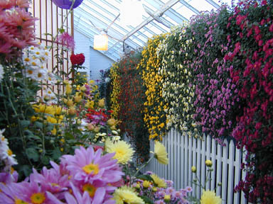 Mum Show in the greenhouse