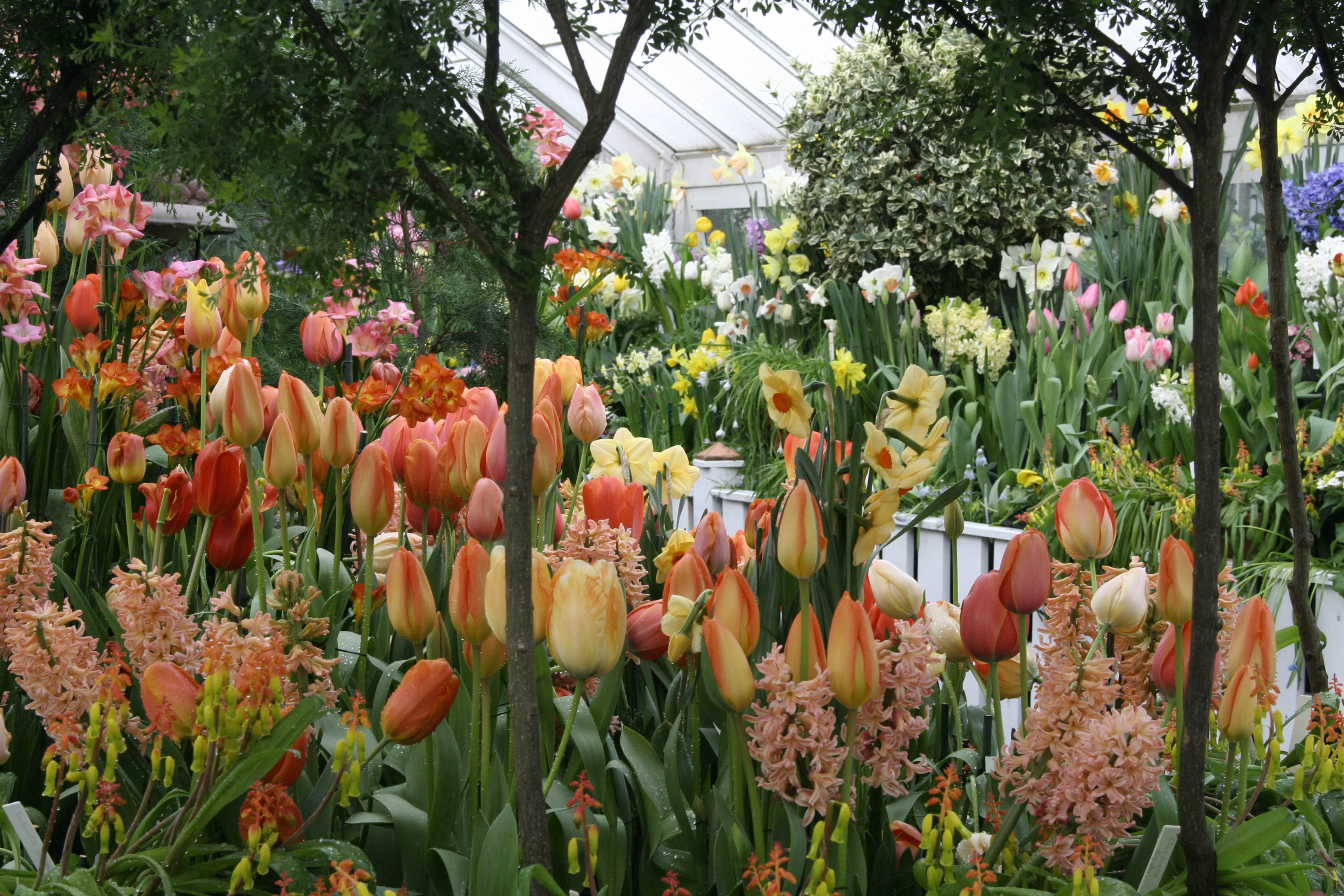 Spring Bulb Show in the greenhouse