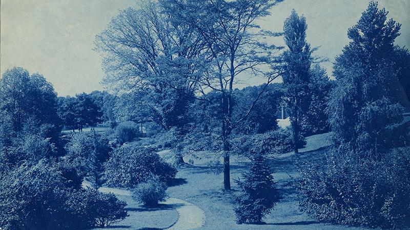 Campus trees 1905