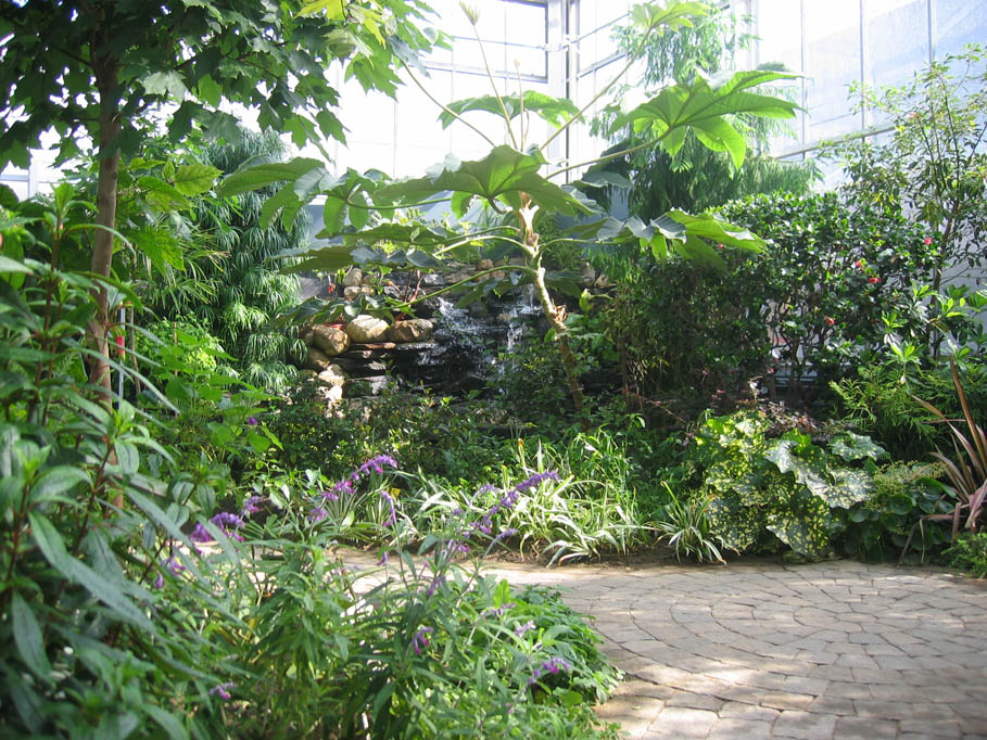 View of the many plants in the Cool Temperate House in the greenhouse