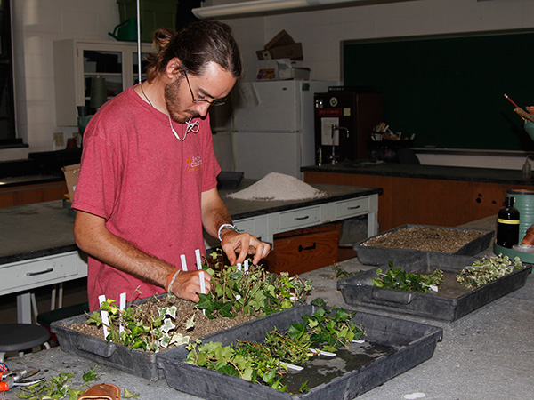 Summer intern Tyler Barron rooting ivy cuttings