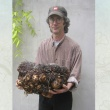 Conservatory Manager Rob Nicholson holds the 55 lb. corm