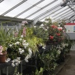 orchids and rhododendrons