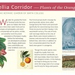 Camellia corridor Information panel