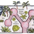 Cool Temperate House map