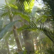 palm house plants in mist