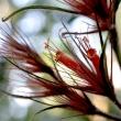 flower from peru