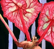 Watercolor painting of begonia leaves