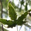under side of fern leaf with spores