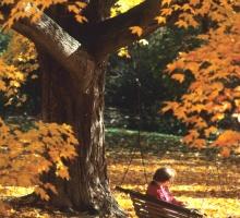 Student sitting in swing among yellow fall foliage