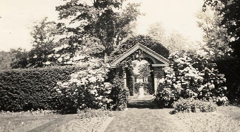 Capen Garden Hedge