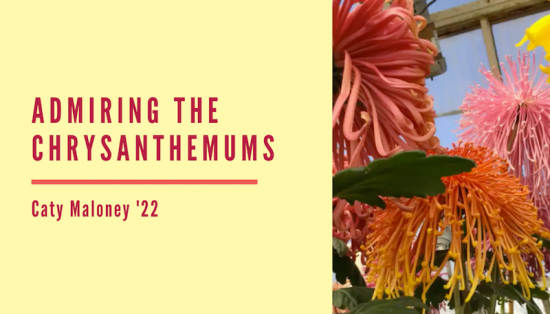 """Admiring the Chrysanthemums"", analysis by Caty Maloney '22"