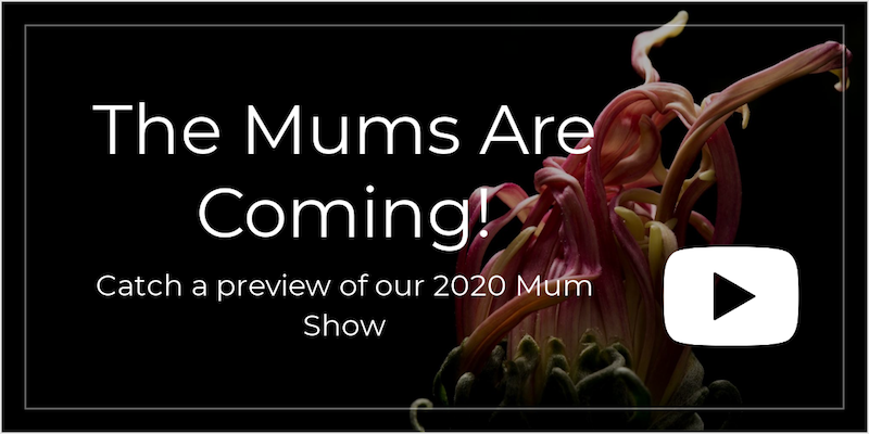 The Mums Are Coming Video image