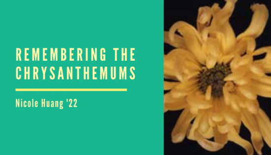 Remembering the Chrysanthemums by Nicole Huang '22