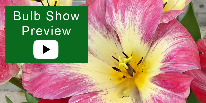 Bulb Show Preview video image