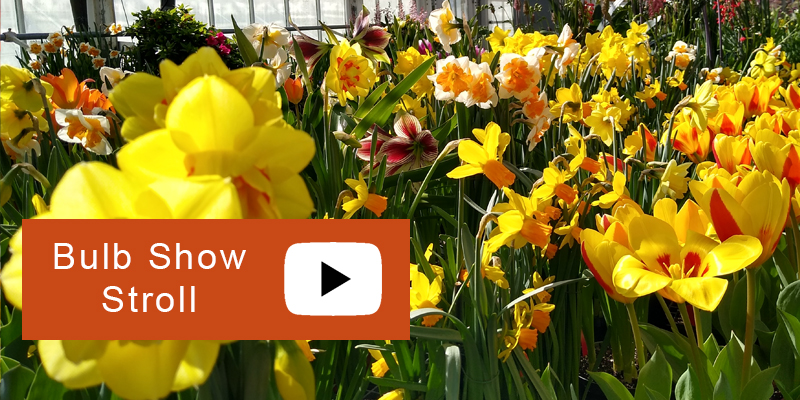 A musical stroll through the Bulb Show