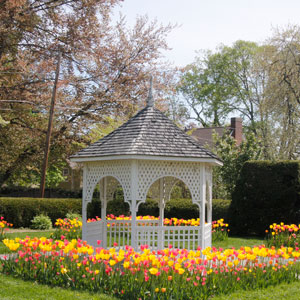 Capen Tulips and Jill Ker Conway gazeebo