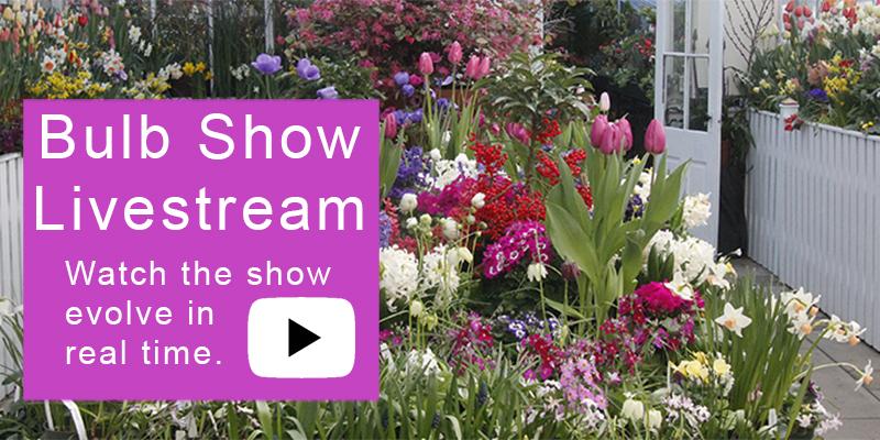 Bulb Show Livestream image
