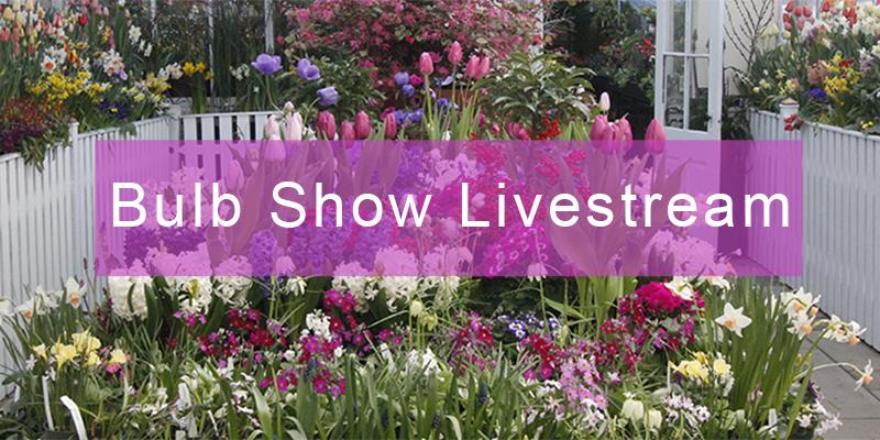 Bulb Show Livestream