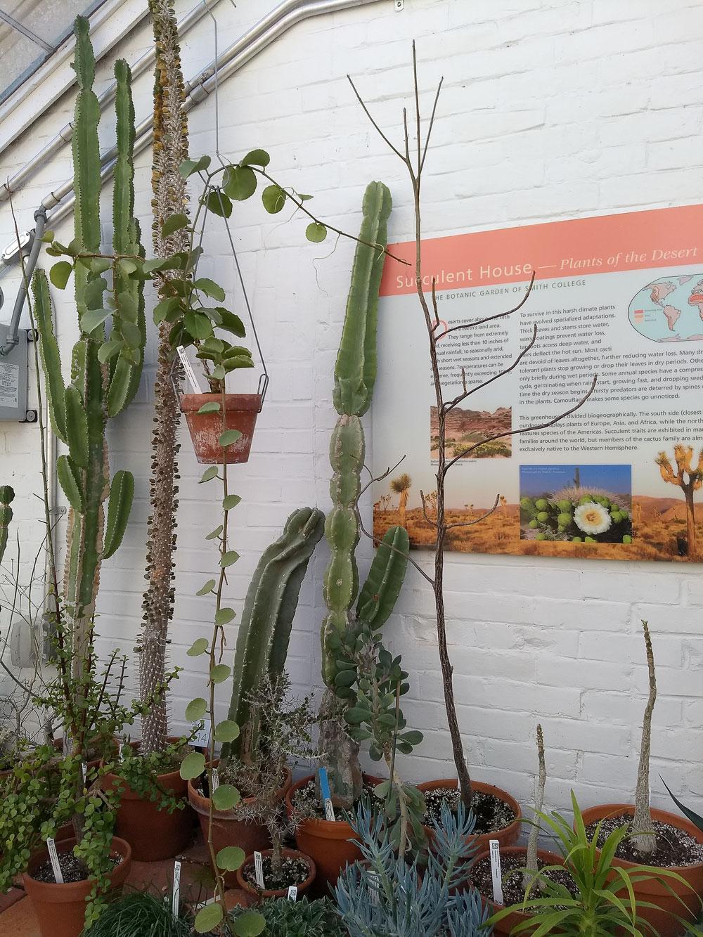 Succulent House plants showing convergent evolution