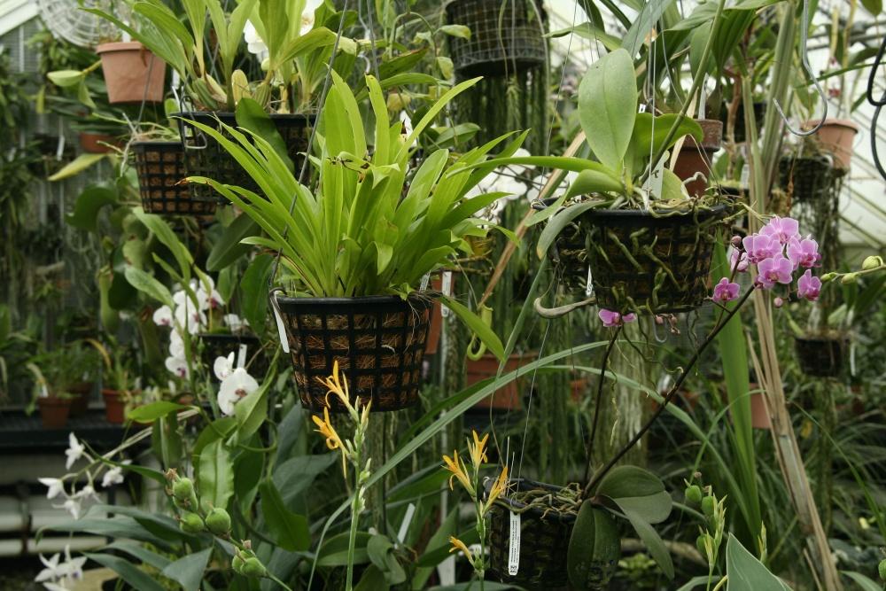 Stove House plants