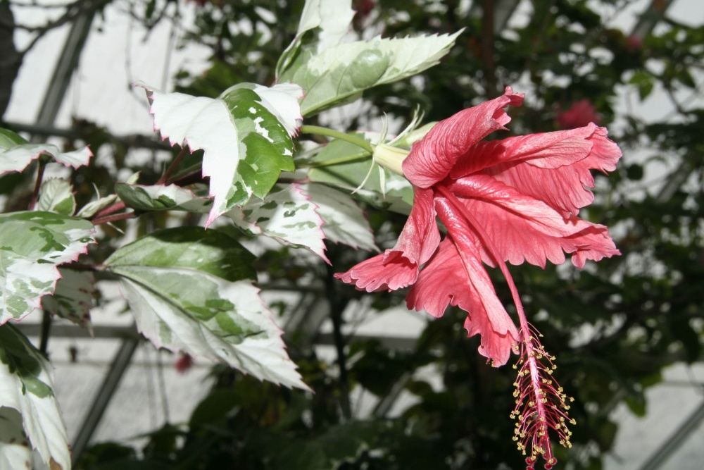 Warm Temperate House plants