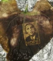 image of President Obama on a bean leaf