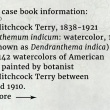 Book information: Emily Hitchcock Terry, 1838-1921 Chrysanthemum indicum: watercolor, 1866 (now known as Dendranthema indica) One of 142 watercolors of American  flowers painted by botanist  Emily Hitchcock Terry between  1850 and 1910.
