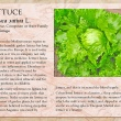 Lettuce image with informational text