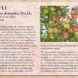 Apple image and informational text