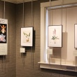 Orchid flower key and orchid paintings