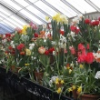 Bulb Show south bench, Cold Storage House