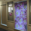 Smith Chrysanthemums: Hybrid Alums exhibition gallery West wall
