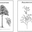 Reconstruction images of Archaeopteris and psilophyton