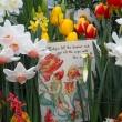 Tulip Fairies