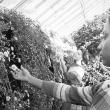 1968 Chrysanthemum Show: Ann Teal '69 and Martha Mercaldi '70