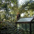Tree ferns and wardian case