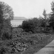 View of Systematics Garden with Neilson Library in background