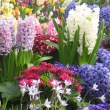 hyacinths and other flowers