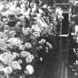 Chrysanthemum Show, 1944