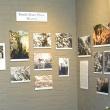 Smith Chrysanthemums: Hybrid Alums, historic photos and Mum Show history
