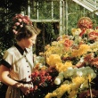 Student looking at chrysanthemums