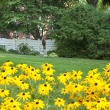 Trudy's garden with black-eyed Susans in foreground