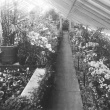 view down the isle in the greenhouse