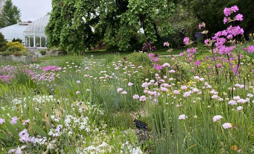 The Rock Garden at the Botanic Garden of Smith College