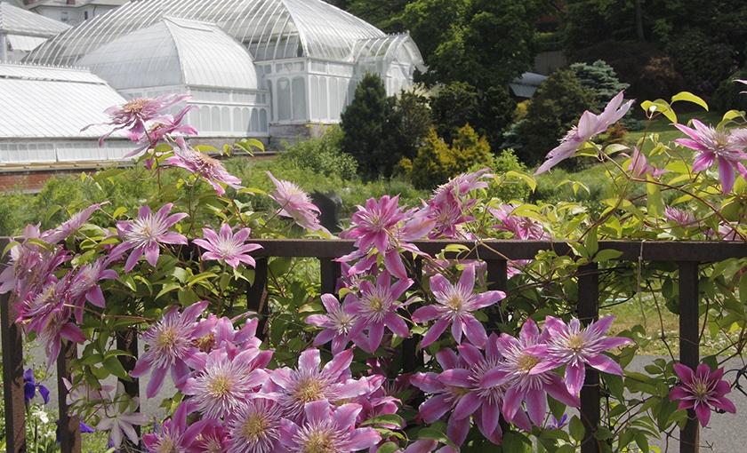 Ruth Brown Richardson Perennial Border Garden | The Botanic