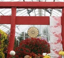 Chrysanthemum Show 2008
