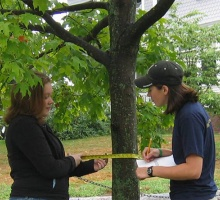 students measuring a tree